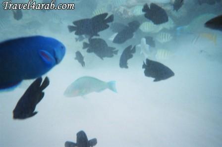 453909 المسافرون العرب جزيرة تيومان عالم تحت الماء