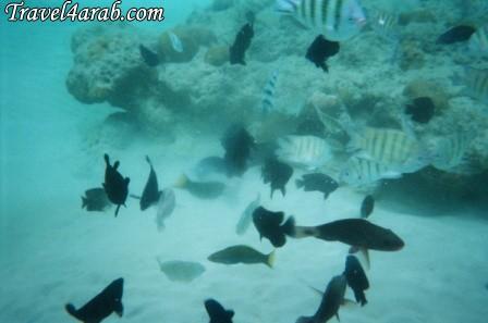 453910 المسافرون العرب جزيرة تيومان عالم تحت الماء
