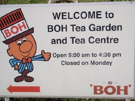 boh-tea-plantation.jpg