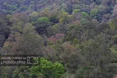 Gunung-Salak-4.jpg