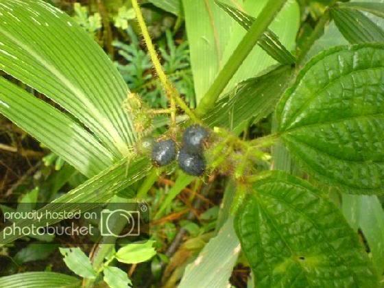 wildfruits.jpg
