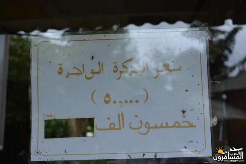 arabtrvl1458485649182.jpg