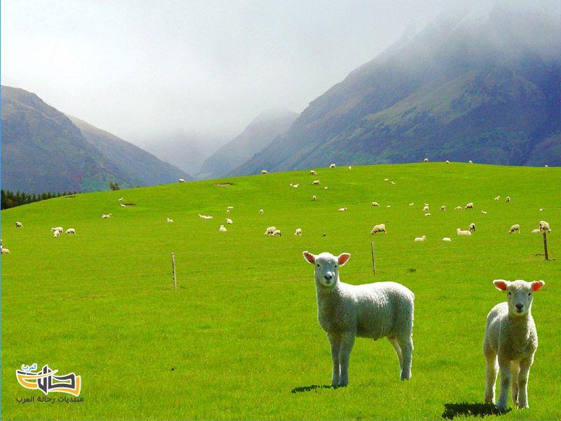 مدينة كرايستشيرتش النيوزيلندية معالم صور طبيعية وسياحية 4822 المسافرون العرب