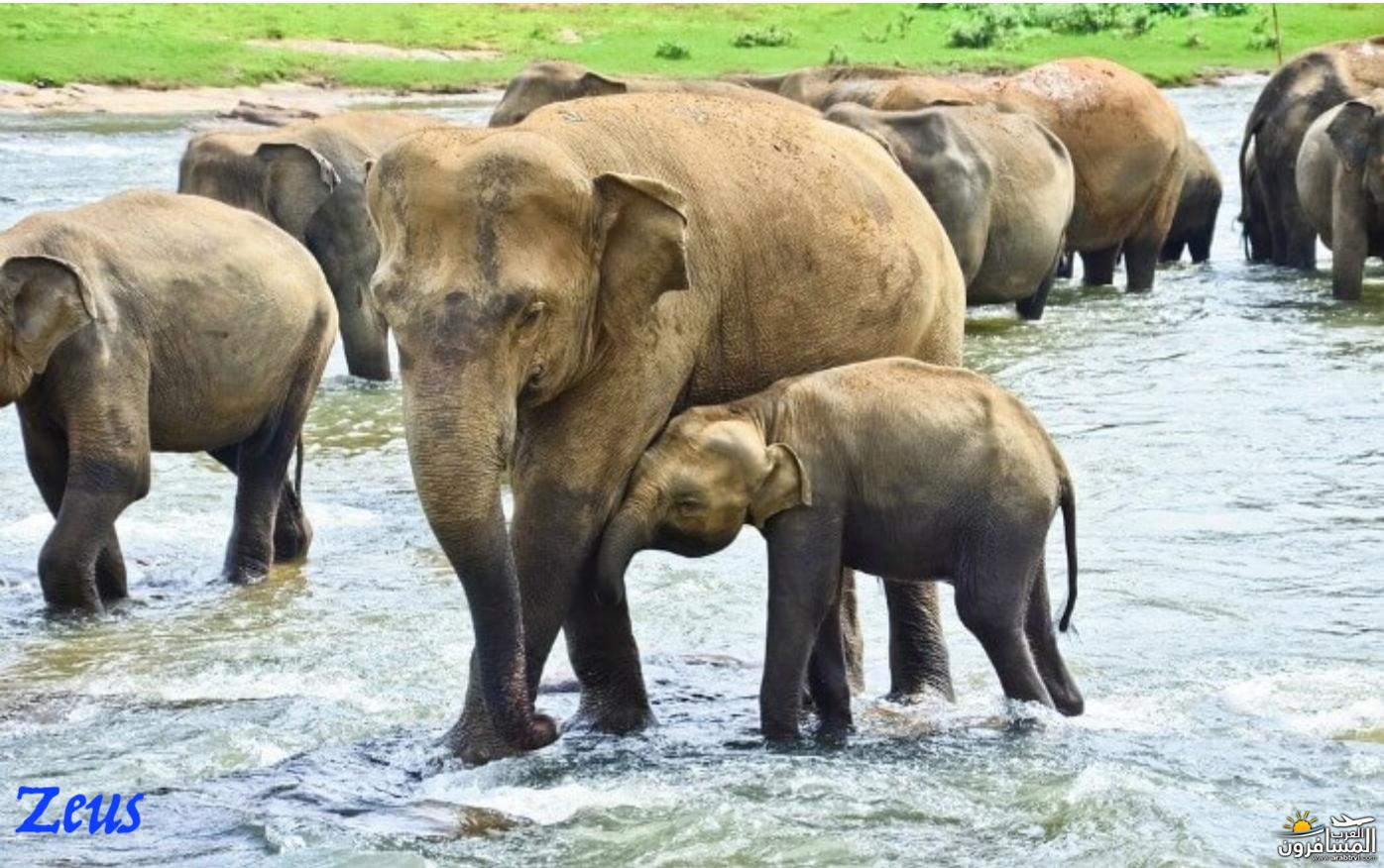 484703 المسافرون العرب الأماكن السياحية في سريلانكا