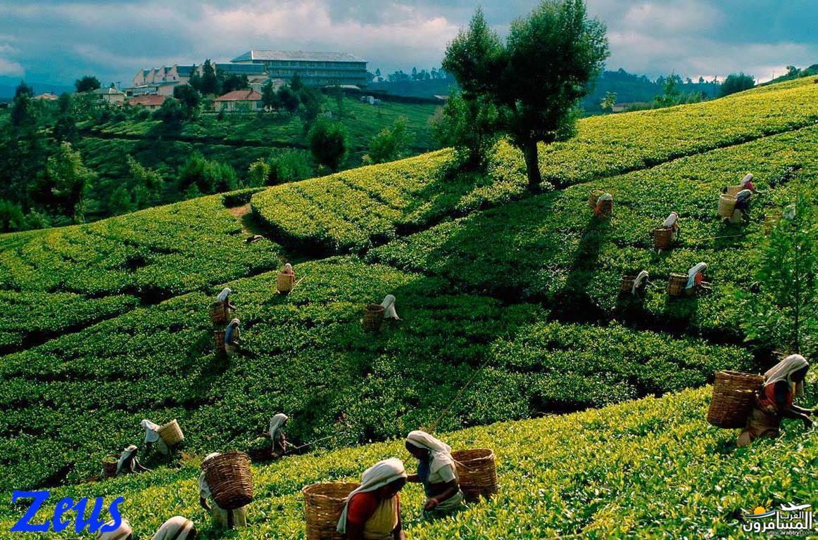 484733 المسافرون العرب الأماكن السياحية في سريلانكا