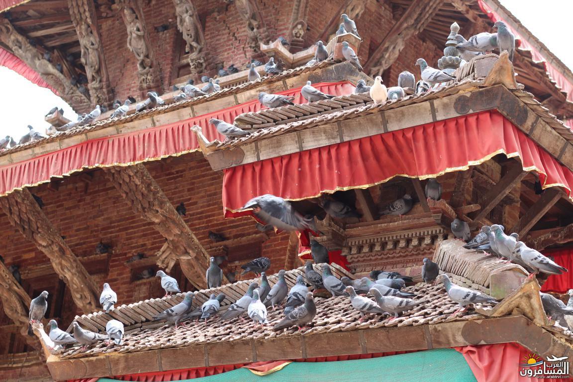 جولة فى دولة نيبال الرائعه 491846 المسافرون العرب