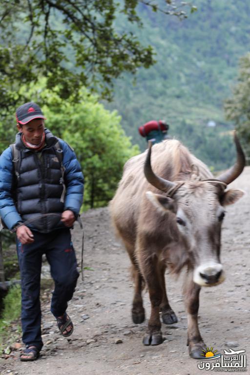 جولة فى دولة نيبال الرائعه 491956 المسافرون العرب