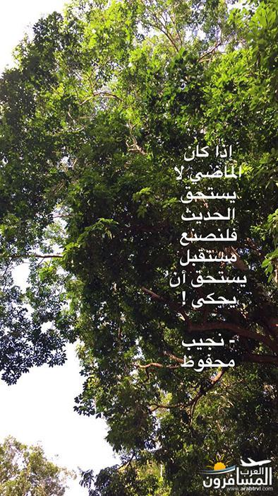 arabtrvl1482438037496.jpg