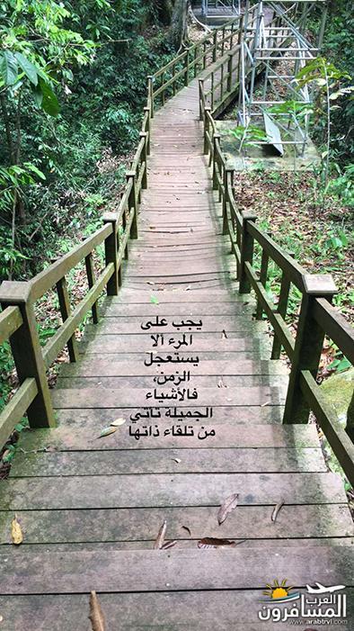 arabtrvl1482440225721.jpg