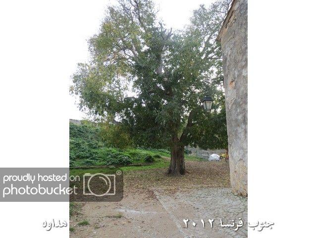 Image00115-1.jpg