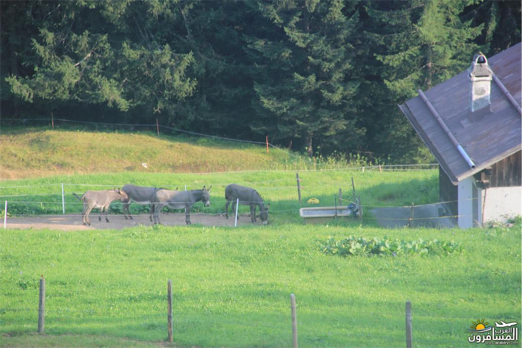 سويسرا بيوت ملوّنة و جداريات-543953