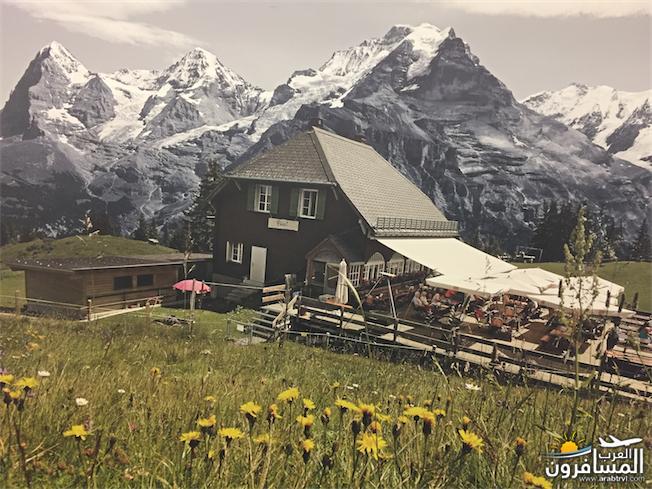 سويسرا بيوت ملوّنة و جداريات-544075
