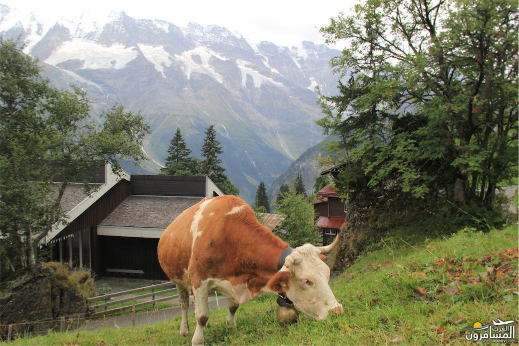 سويسرا بيوت ملوّنة و جداريات-544114