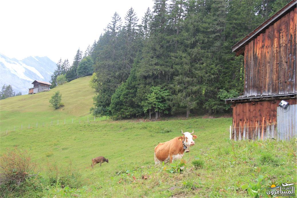 سويسرا بيوت ملوّنة و جداريات-544116