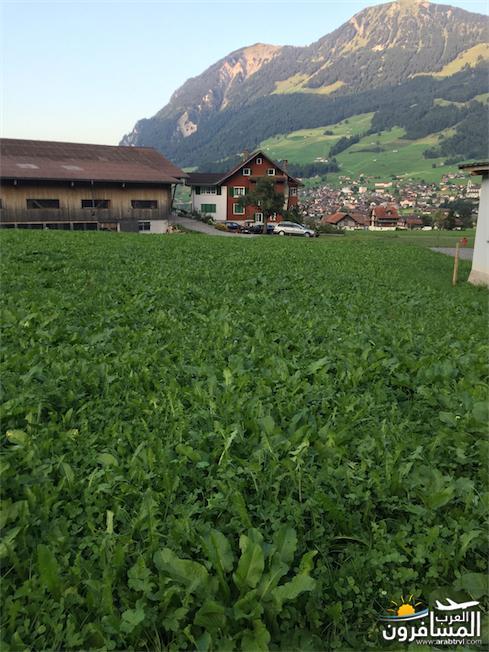 سويسرا بيوت ملوّنة و جداريات-544206