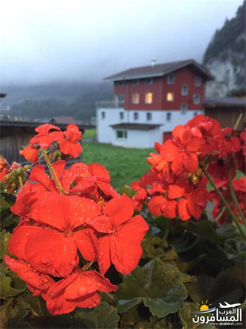 سويسرا بيوت ملوّنة و جداريات-544207