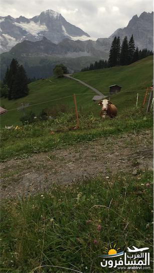 سويسرا بيوت ملوّنة و جداريات-544216