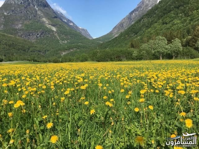 565632 المسافرون العرب النرويج بلد الطبيعه والجمال
