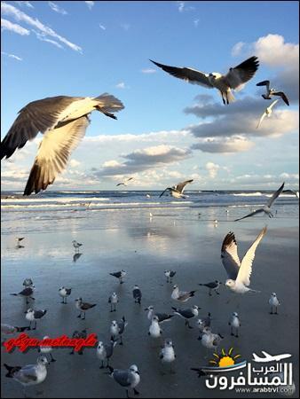 امــــريكـــا القـــارة-594376