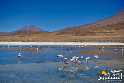 مدينة بوليفيا دولة داخلية في أمريكا الجنوبية-601343
