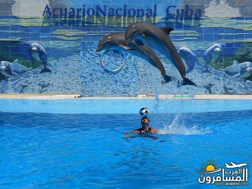 arabtrvl1478502629362.jpg