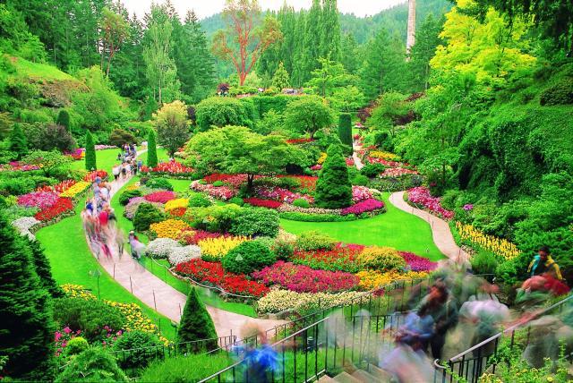 حدائق بوتشارت الملونة في كندا-604259