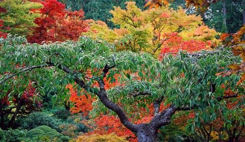 حدائق بوتشارت الملونة في كندا-604274