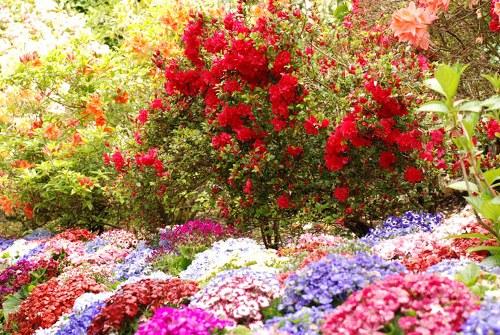 حدائق بوتشارت الملونة في كندا-604277