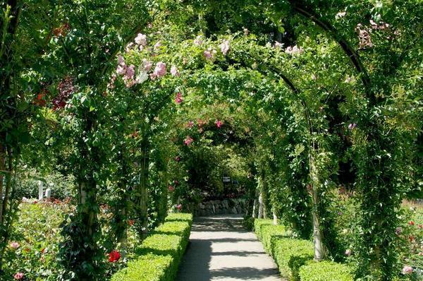 حدائق بوتشارت الملونة في كندا-604279