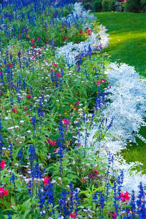 حدائق بوتشارت الملونة في كندا-604280