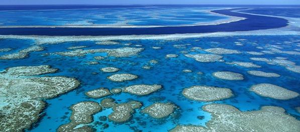 605165 المسافرون العرب الحاجز المرجاني العظيم