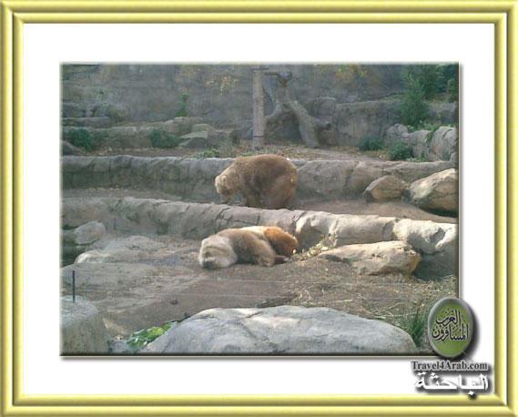 Zoo-9.jpg