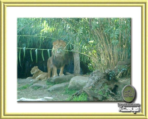 Zoo-10.jpg