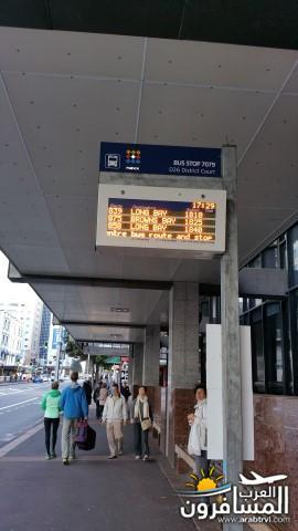 نيوزلندا العشق والجمال-609436