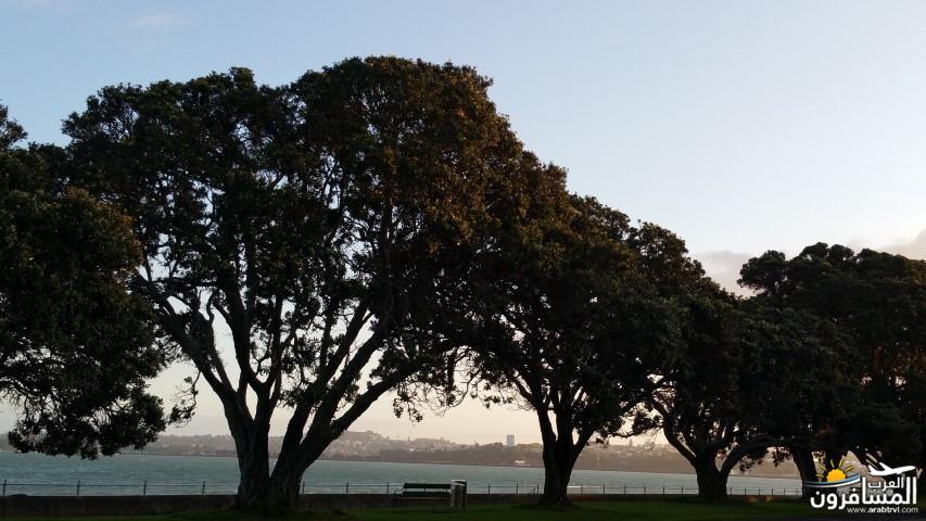 نيوزلندا العشق والجمال-609451