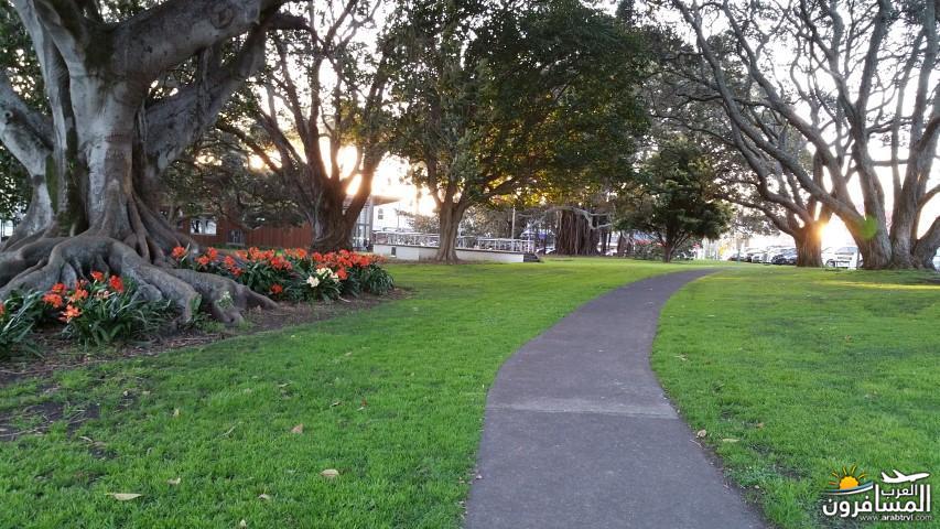 نيوزلندا العشق والجمال-609454