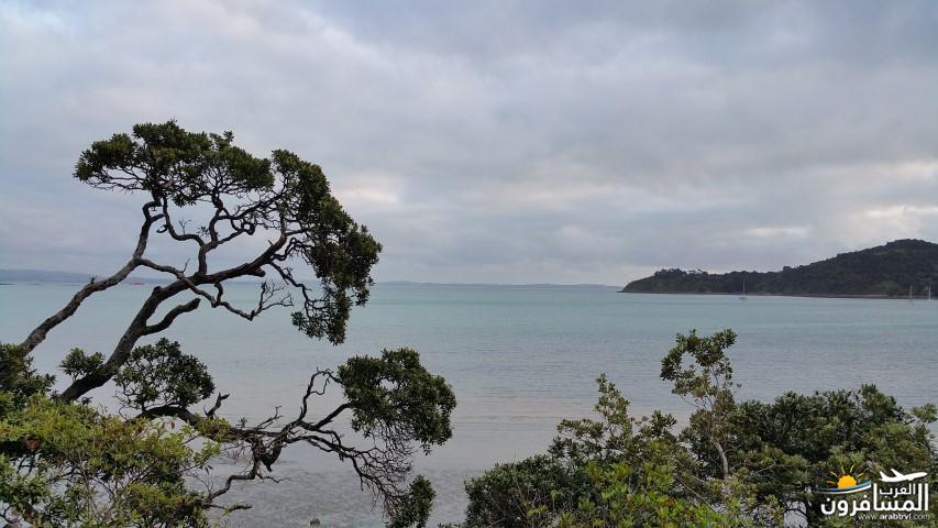 نيوزلندا العشق والجمال-609506