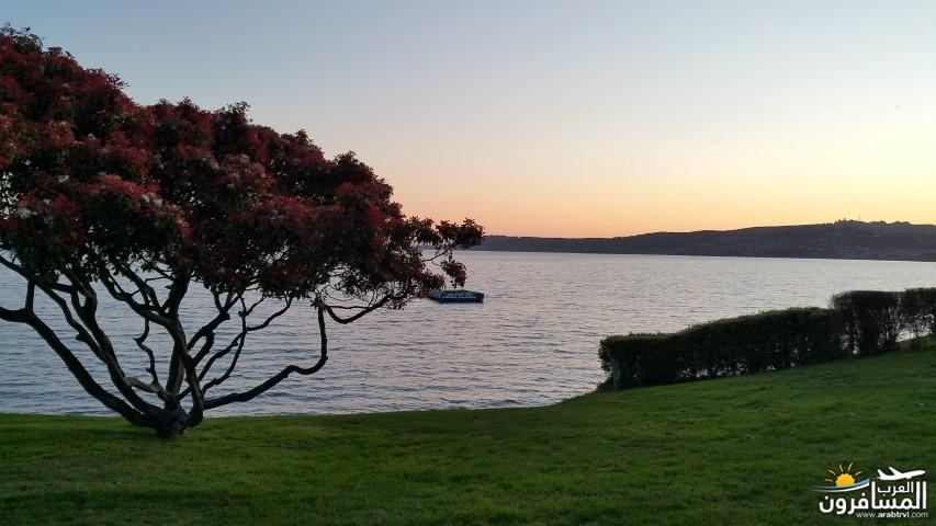 نيوزلندا العشق والجمال-609515