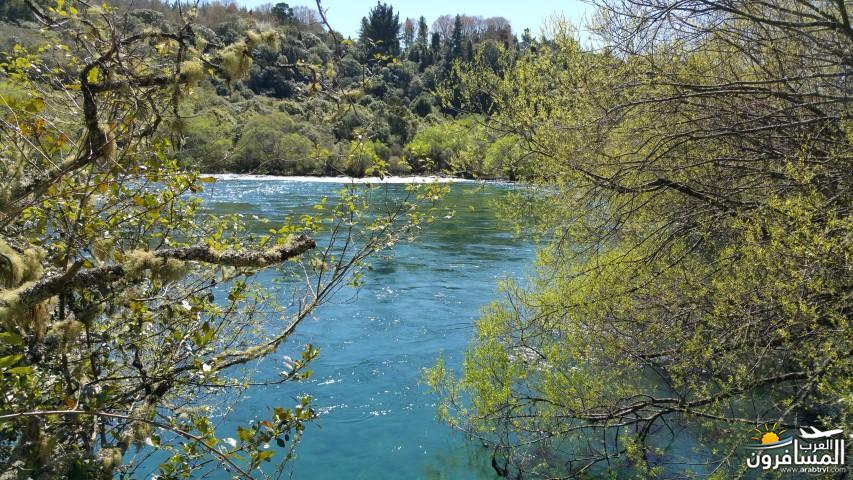 نيوزلندا العشق والجمال-609527