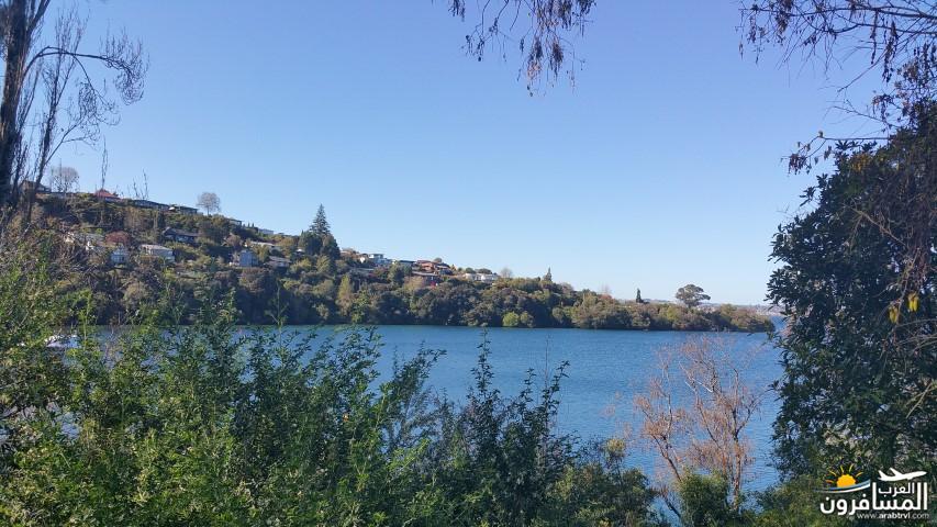 نيوزلندا العشق والجمال-609549