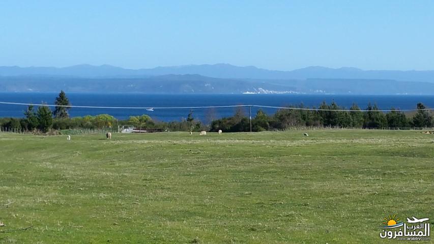 نيوزلندا العشق والجمال-609555