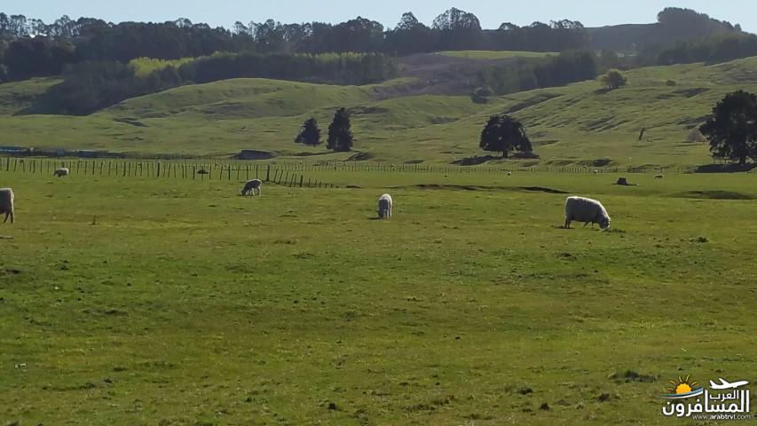 نيوزلندا العشق والجمال-609556
