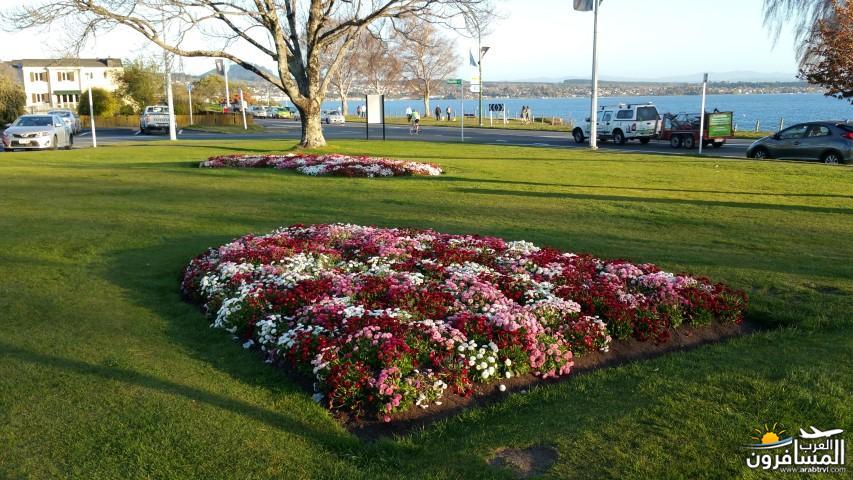 نيوزلندا العشق والجمال-609572
