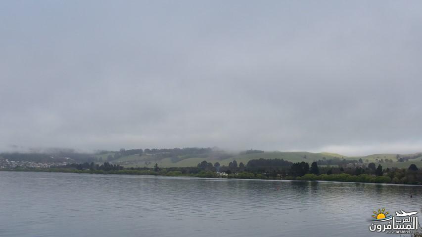 نيوزلندا العشق والجمال-609590