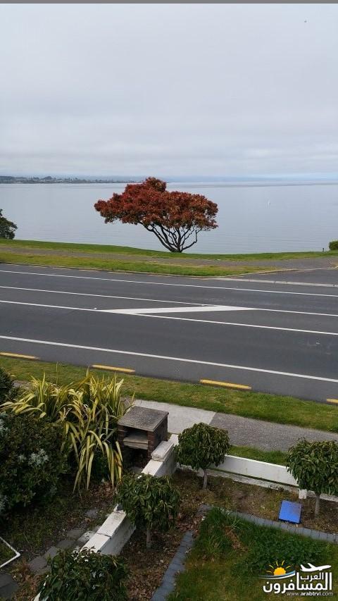 نيوزلندا العشق والجمال-609599