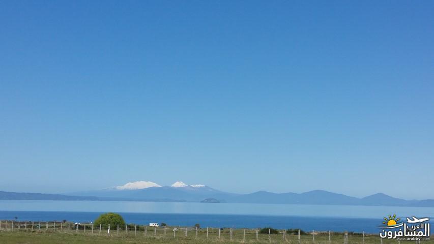نيوزلندا العشق والجمال-609600