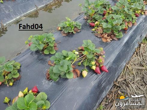 arabtrvl1450955197855.jpg
