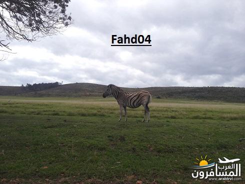 arabtrvl1450959100627.jpg