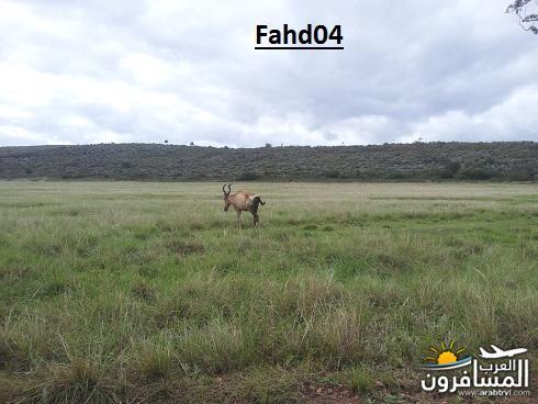 arabtrvl1450959100648.jpg