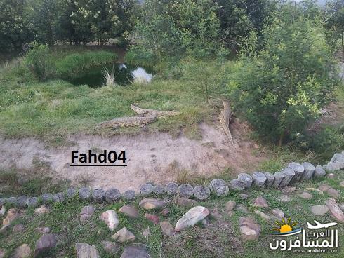 arabtrvl1450959280778.jpg